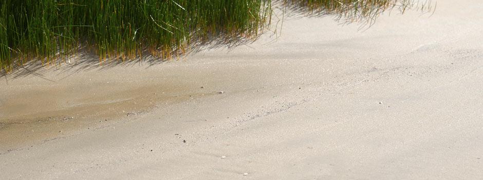 sandGreen