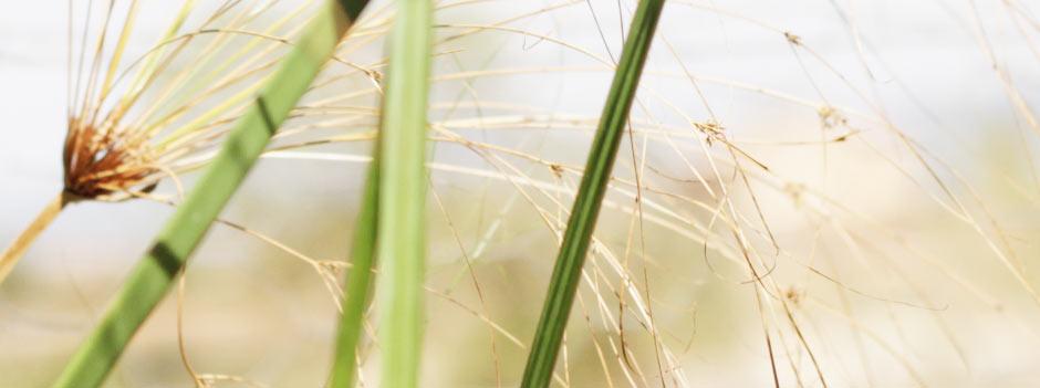 cu-grass